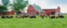 Rural_page_header.jpg