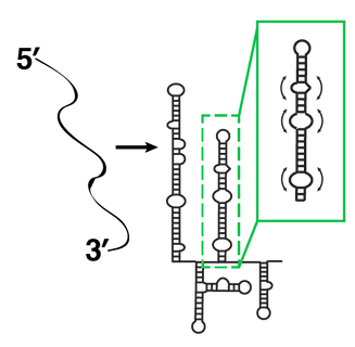 RNAdynamics_general-01.png