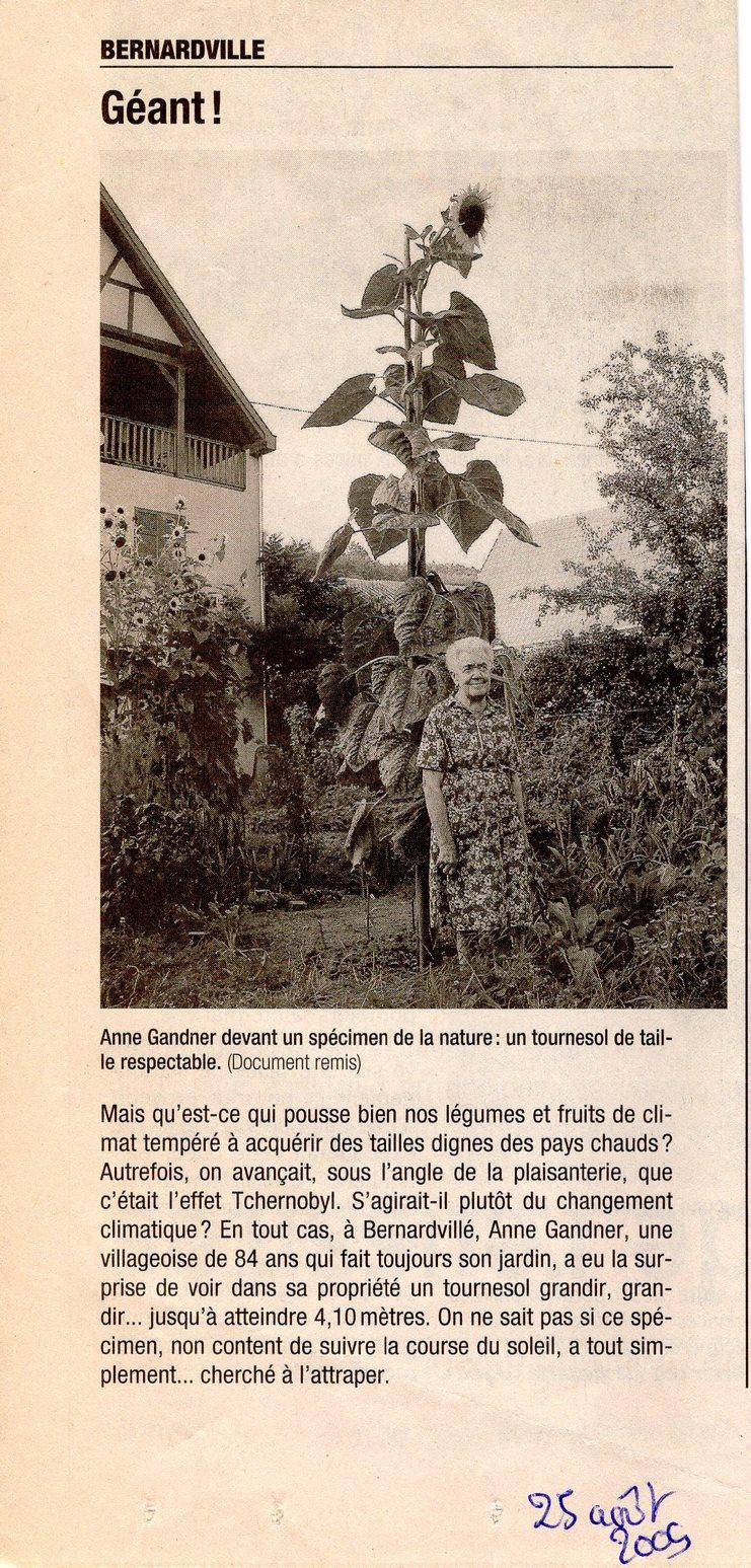 Tounesol géant famille Gandner204 (Copie