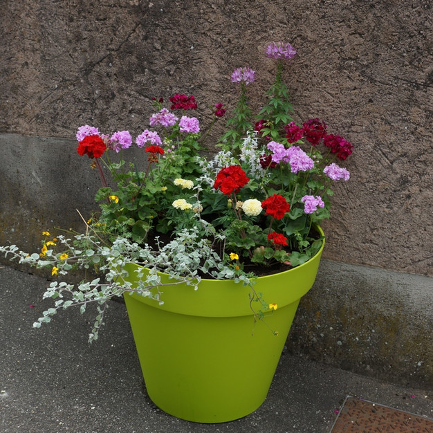 pot-de-fleurs Bernardvillé