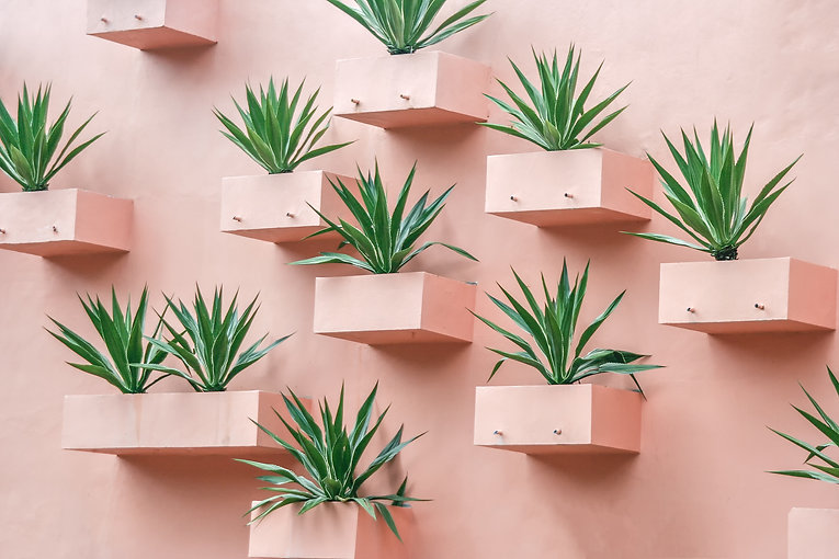 Succulents on the wall. Plants in arid p