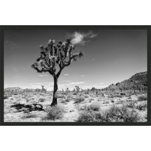 Joshua tree 1