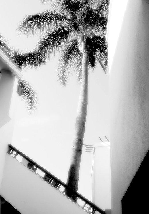 Summer Palm