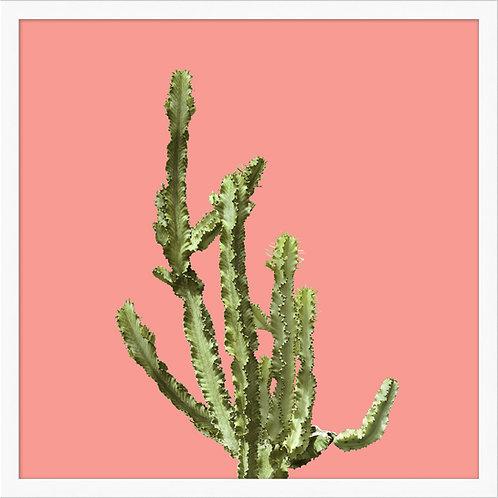 Sherbet Cactus 2