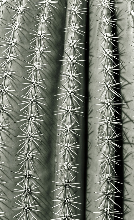 Silver Spikes Grand 2