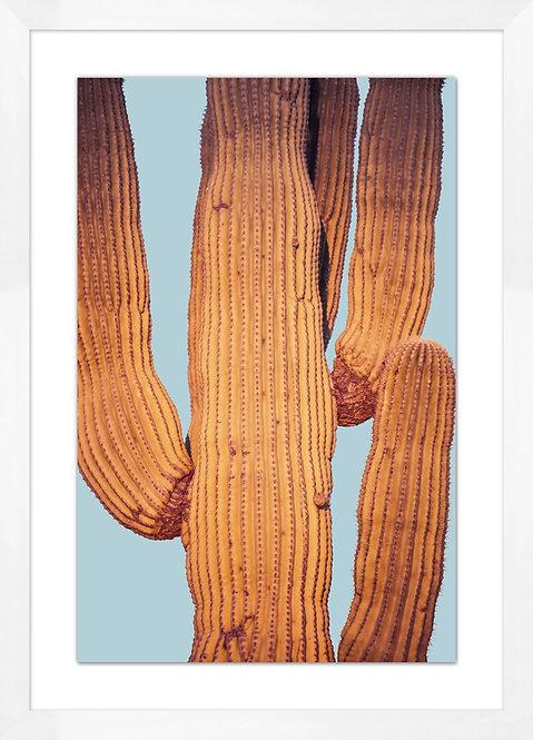 Desert Cactus 2