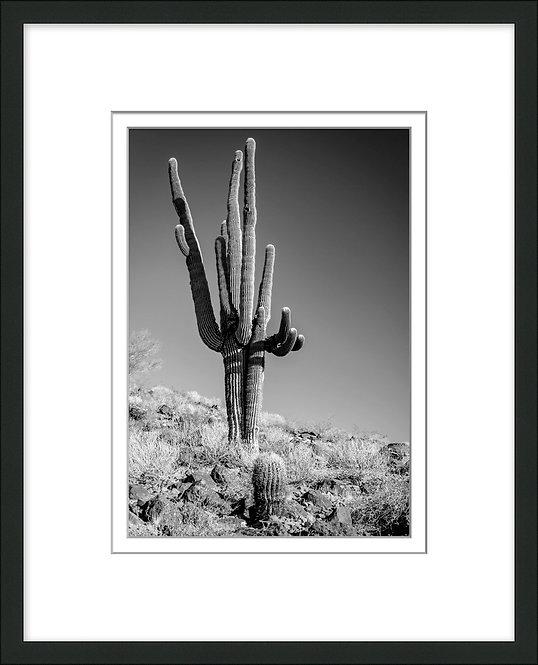 Black & White Cactus 2