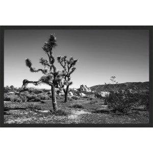 Joshua Tree 2