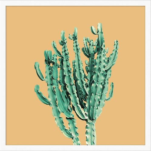 Sherbet Cactus 1