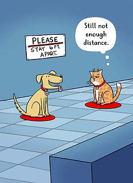 low_Cat Dog Social Distance_cover.jpg
