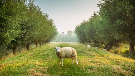 The Good Shepherd - Service 17.10.21