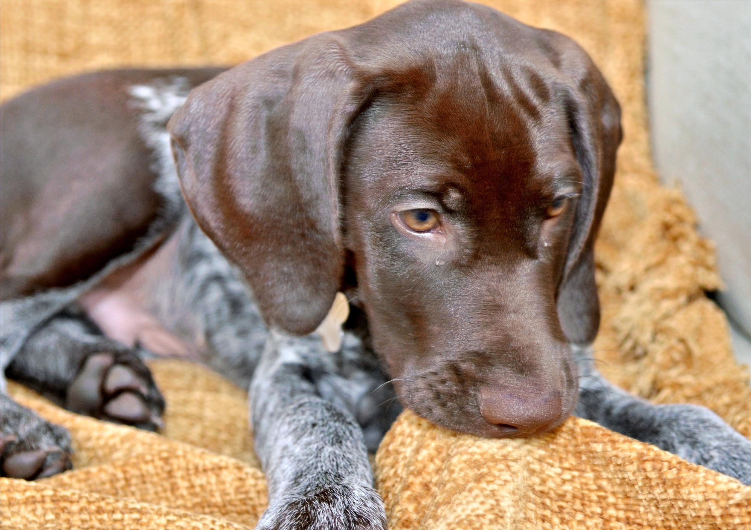 3-Aug PM Puppy Training & Socialisation