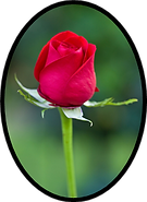 Obit Rose Icon.png