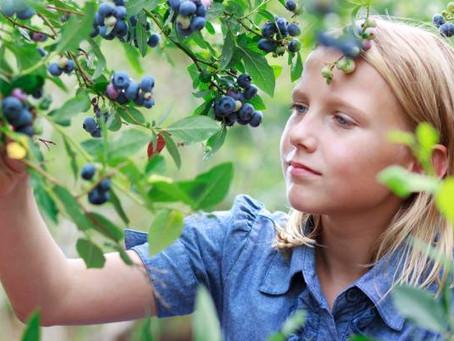 Berries, Berries, Everywhere!