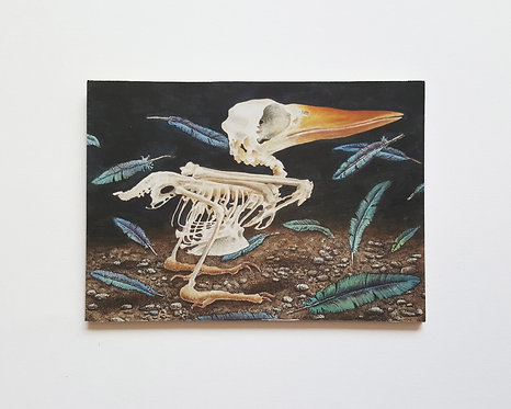 Exploded Kingfisher