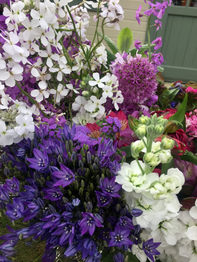 Spring Flowers at Yorkshire Petals