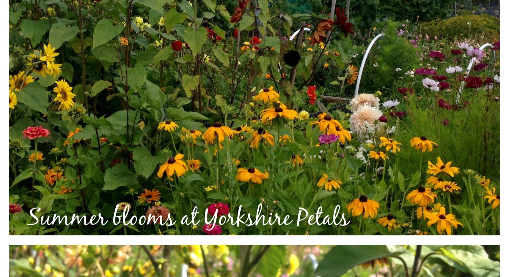 Summer Flowers at Yorkshire Petals