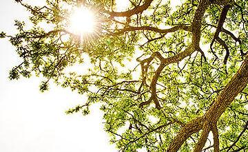 Baumbestattung Waldbestattung Bestattungen Zapatka
