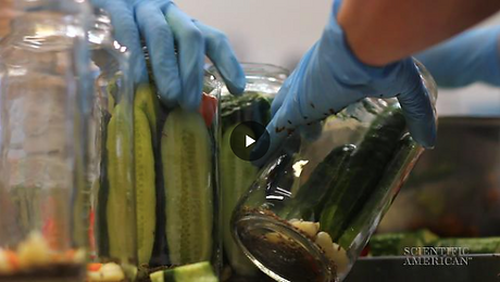 pickles in glass jars
