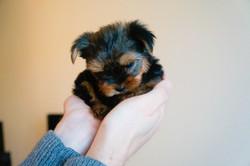 Tiffany baby (1 of 6)
