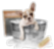 kisspng-chihuahua-pomeranian-cat-dog-gro