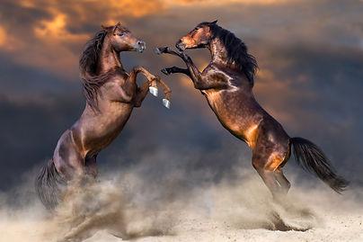 Horse rearing Mediation.jpg