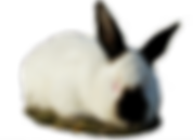 Наши кролики