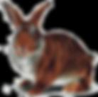 Происхождение и биологические особенности кроликов