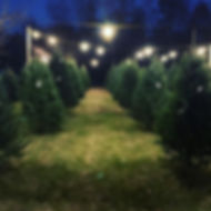 Beautiful FULL christmas trees have been