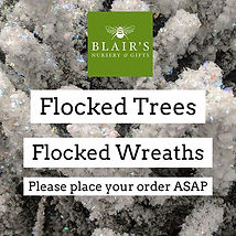 Yes, we flock Christmas trees & Wreaths.