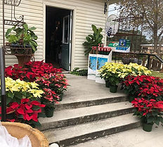 Poinsettias have arrived at Blair's!! #s