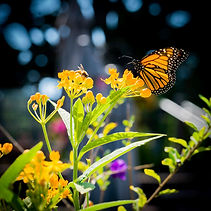 monarchandbee.jpg
