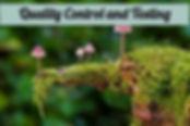 mushroom-2798150_1920_edited.jpg