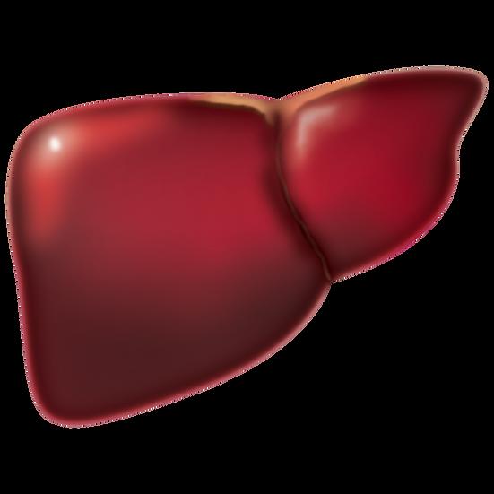 Liver Support Pack