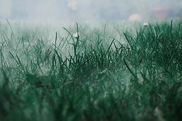 meadow-5648849_1920.jpg