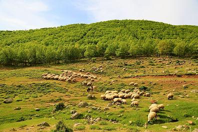 sheep-ge0610e23c_1920.jpg