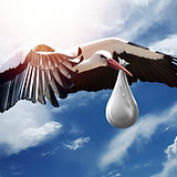 bird-3058712_1920.jpg