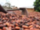 800px-Cultivateur_de_cacao_04.jpg