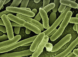 koli-bacteria-123081_1920.jpg