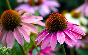 flowers-5491168_1920.jpg