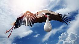 bird-g289b93045_1920.jpg