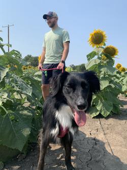 Sunflowers with Jazzy