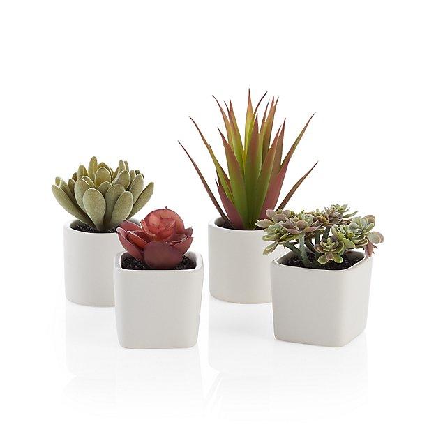 Crate & Barrel Potted Succulents, Set of 4