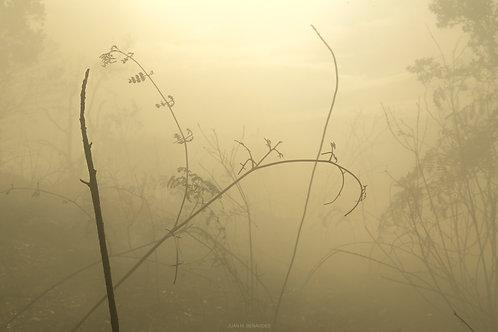 Fotografías Fine Art (Fotos)