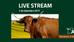 Live stream da Expormor 2017 – 2 de Setembro 2017