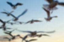 oiseaux qui s'envolent