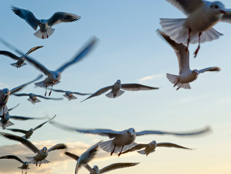 Magnificent bird migrations