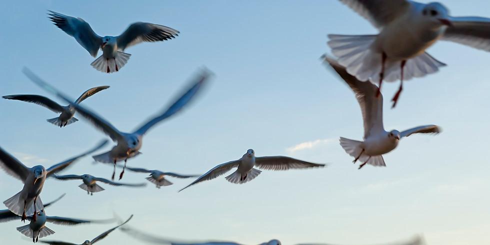 Tamworth Birdwatchers July Events