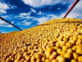 IPPA/CEPEA: COVID-19 gera efeito altista nos preços agropecuários
