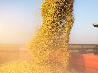 China registra importação recorde de soja do BR em junho e faz novas compras nos EUA nesta segunda.